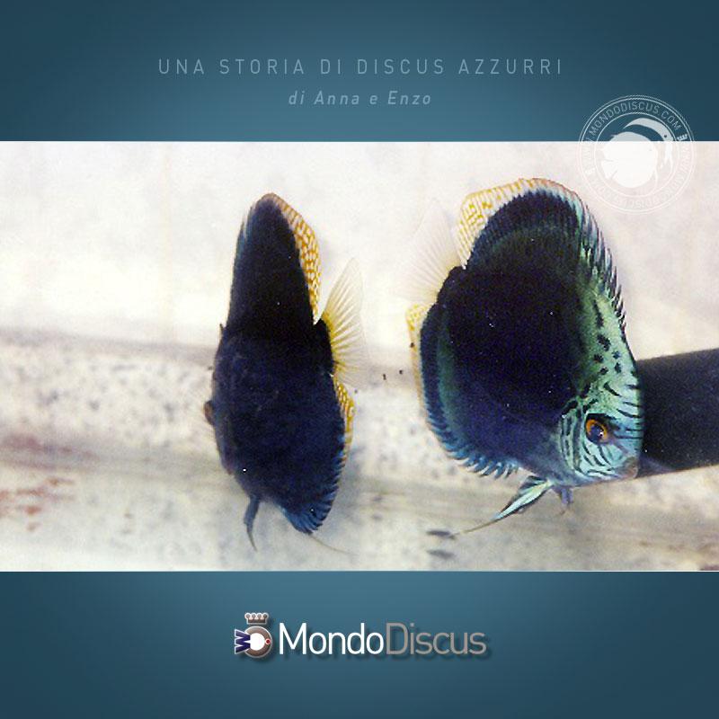 DiscusAzzurri4