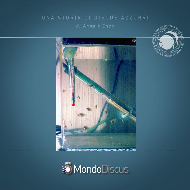 DiscusAzzurri5