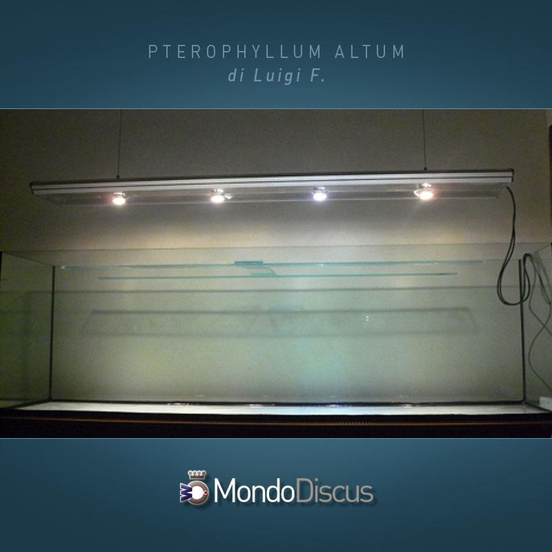 MasterArticoli-PterophyllumAltum3