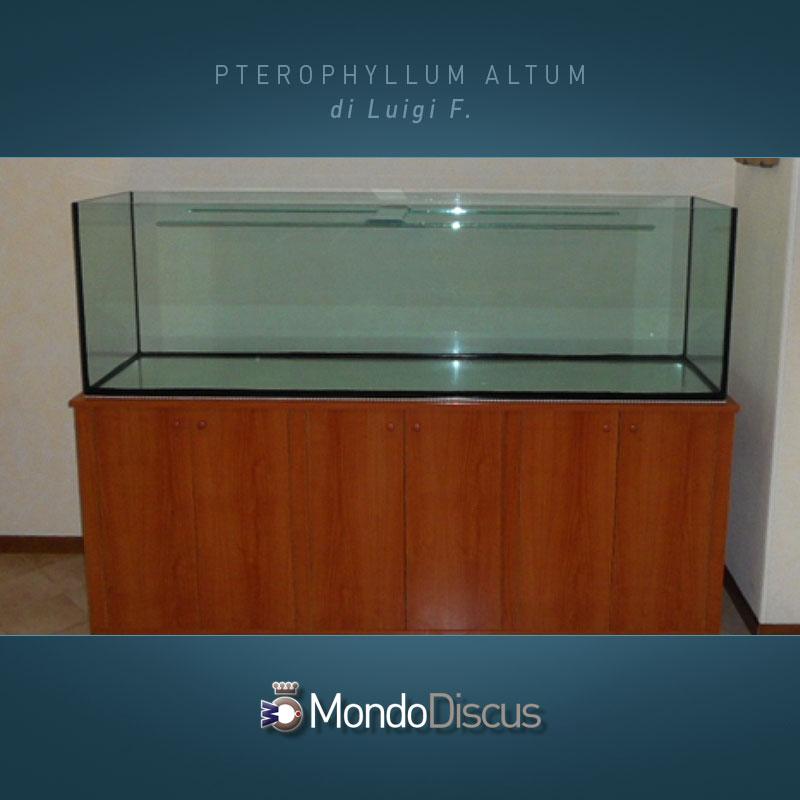 MasterArticoli-PterophyllumAltum6